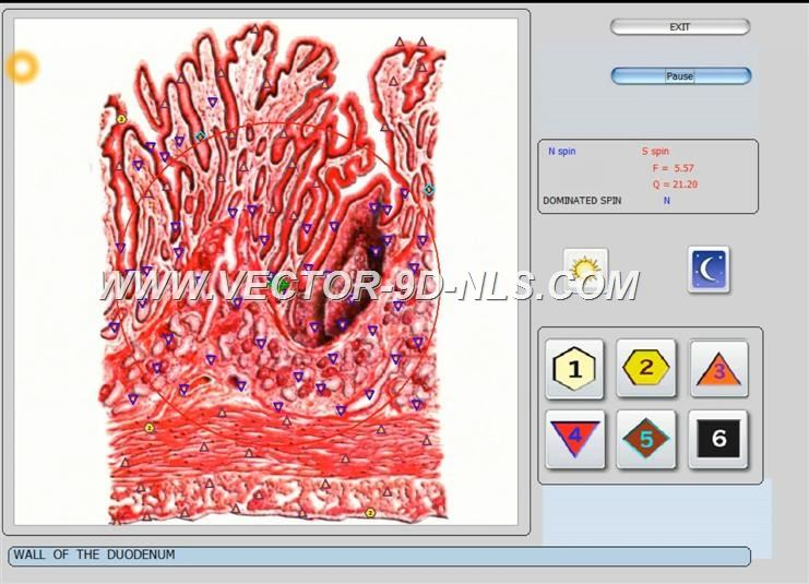 vector 8d 9d nls   software (29)