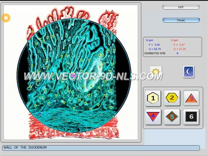 vector 8d 9d nls   software (30)