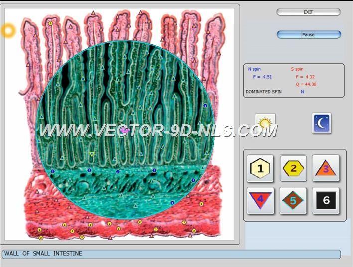 vector 8d 9d nls   software (38)