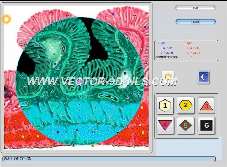vector 8d 9d nls   software (40)
