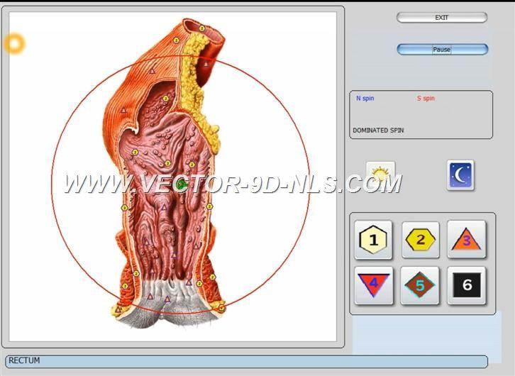 vector 8d 9d nls   software (41)