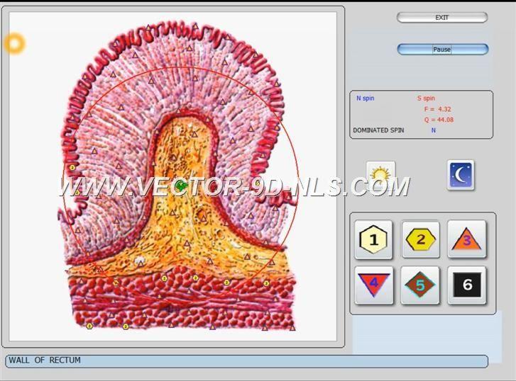 vector 8d 9d nls   software (43)