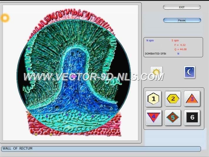 vector 8d 9d nls   software (44)