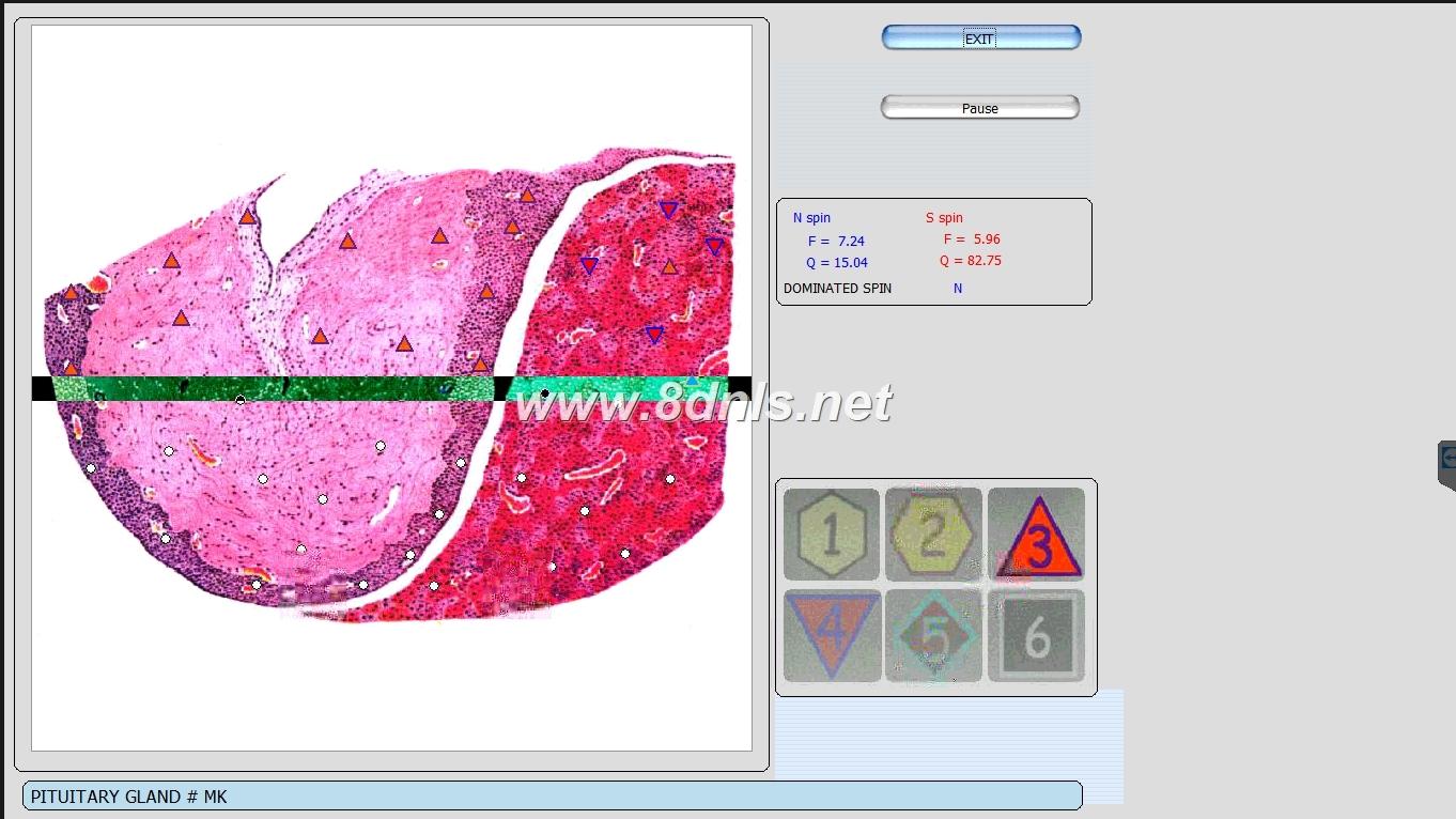 vector nls scan